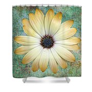 Cream Coloured Daisy Shower Curtain by Chris Thaxter