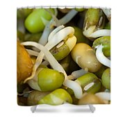 Cross Section Of Some Healthy Sprouts Shower Curtain by Ashish Agarwal