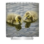 Curiosity Shower Curtain by Heather Applegate
