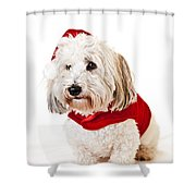 Cute dog in Santa outfit Shower Curtain by Elena Elisseeva