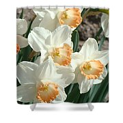 Daffodil Flowers Art Prints Spring Floral Shower Curtain by Baslee Troutman