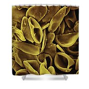 Daffodil Narcissus Sp Pollen 700x Shower Curtain by Albert Lleal