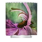 Daisy Fun - A01v042t05 Shower Curtain by Variance Collections