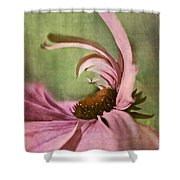 Daisy Fun - A01v04b2t05 Shower Curtain by Variance Collections
