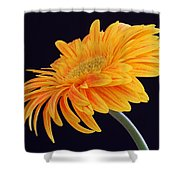 Daisy Of Joy Shower Curtain by Juergen Roth