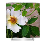 Dancing Flora Shower Curtain by Andee Design
