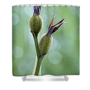 Dazzling Canna Seed Pods Shower Curtain by Kathy Clark