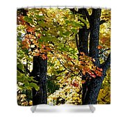 Dazzling Days Of Autumn Shower Curtain by Will Borden