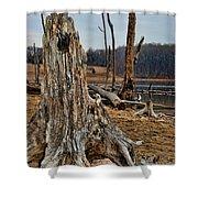 Dead Wood Shower Curtain by Paul Ward
