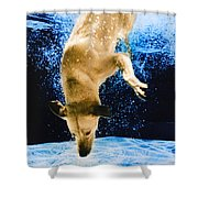 Diving Dog 3 Shower Curtain by Jill Reger