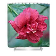 Double Hibiscus Shower Curtain by Carol Groenen