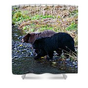 Double Trouble Shower Curtain by Mike  Dawson