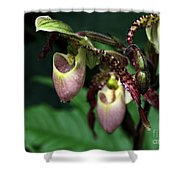 Drippy Lady Slipper Orchids Shower Curtain by Sabrina L Ryan