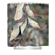 Dry Leaves Shower Curtain by Lisa Phillips