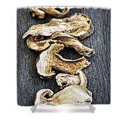 Dry Porcini Mushrooms Shower Curtain by Elena Elisseeva