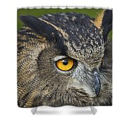 Eagle Owl 2 Shower Curtain by Clare Bambers