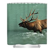 Elk In The Athabasca River Shower Curtain by Bob Christopher