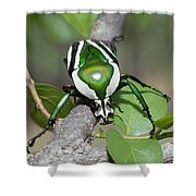 Emerald Fruit Chafer Beetle Shower Curtain by Gerry Ellis