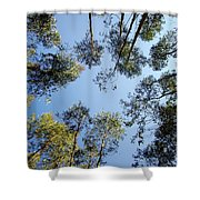 Eucalyptus Shower Curtain by Carlos Caetano
