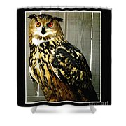 Eurasian Eagle-owl With Oil Painting Effect Shower Curtain by Rose Santuci-Sofranko