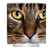 Face Framed Feline Shower Curtain by Art Dingo