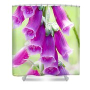 Faerie Bells Shower Curtain by Rory Sagner