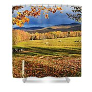 Fall Colours, Cows In Field And Mont Shower Curtain by Yves Marcoux