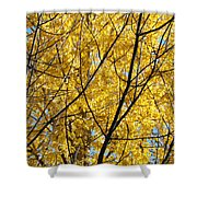 Fall Trees Art Prints Yellow Autumn Leaves Shower Curtain by Baslee Troutman