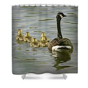 Family Swim Shower Curtain by Heather Applegate