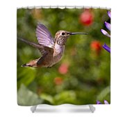Female Allen's Hummingbird Shower Curtain by Mike Herdering