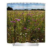 Field Of Thistles Shower Curtain by Tamyra Ayles