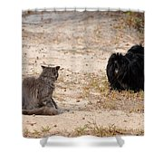 First Impressions Shower Curtain by Al Powell Photography USA