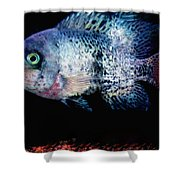 Fish Swim Joy  In Denmark Shower Curtain by Colette V Hera  Guggenheim