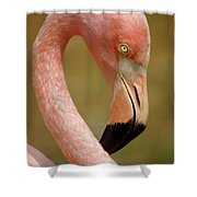Flamingo Head Shower Curtain by Carlos Caetano