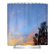 Flight Into The Sunset Shower Curtain by Ausra Paulauskaite