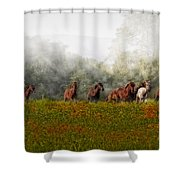 Foggy Morning Shower Curtain by Susan Candelario