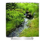 Forest Creek In Newfoundland Shower Curtain by Elena Elisseeva