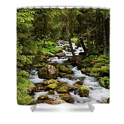 Forest Stream In Tatra Mountains Shower Curtain by Artur Bogacki