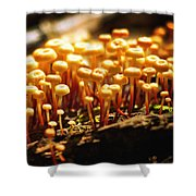 Forest Trifles Shower Curtain by Rebecca Sherman