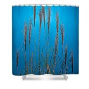 Fountain Grass In Blue Shower Curtain by Steve Gadomski