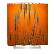 Fountain Grass In Orange Shower Curtain by Steve Gadomski