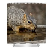 Fox Squirrel Shower Curtain by Lori Tordsen