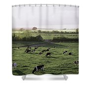 Friesian Bullocks, Ireland Herd Of Shower Curtain by The Irish Image Collection