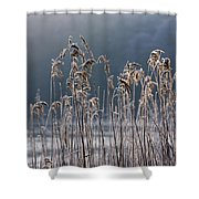 Frozen Reeds At The Shore Of A Lake Shower Curtain by John Short
