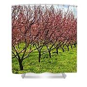 Fruit Orchard Shower Curtain by Elena Elisseeva
