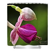Fuchsia Flower Shower Curtain by Elena Elisseeva