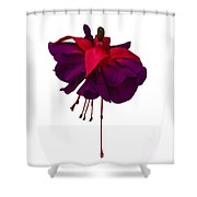 Fuchsia On White Shower Curtain by Dawn OConnor