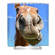 Funny Brown Horse Face Shower Curtain by Jennie Marie Schell