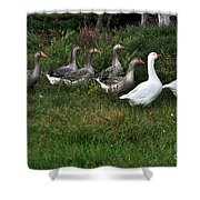 Gaggle Of Geese Shower Curtain by Kaye Menner