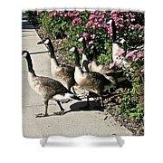Garden Geese Parade Shower Curtain by Susan Herber